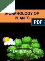 3 Plant Morphology
