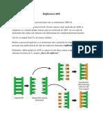 Replicarea ADN(2)