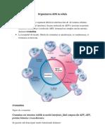 Organizarea ADN in Celula(3)