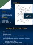 Morfologia_folha