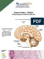 Roteiro de histologia