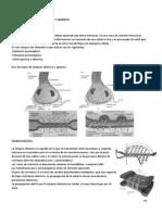 Lección 7 fisiología animal UMA