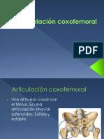 Clase Art. Coxofemoral y Rodilla