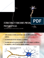 Estructura y Funciones PresináPticas y Postsinápticas
