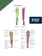 Lower Limb & Hip