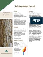 SITE ARVORES FICHA 34 Gochnatia Polymorpha