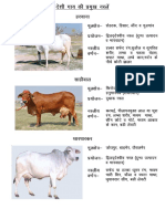 257387956 NABARD Dairy Farming Project PDF