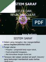1. Anfis SISTEM SARAF S1.pptx