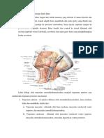 1.Anatomi Leher Dan Kelenjar Limfa Leher_modul 2