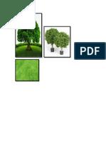 Arbol, Arbusto, Hierba
