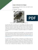 Los Pinzones de Darwin Siguen Evolucionando en Las Galápagos