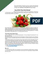 Răng nhiễm fluor có tẩy trắng được không – Răng đẹp an toàn.docx.pdf