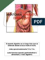 CLASE Anatomía Aparato Digestivo