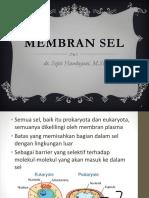1. Membran Sel
