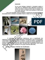 Evolução (Taxonomia)