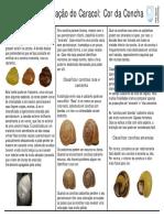Identificacao Cor Concha Bandas Caracois