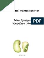 Ciclo de Las Plantas Con Flor