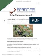 La HIERBA MORA y Sus Beneficios Herbolarios _ Apromeci Artículo