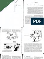 Invasión de la tierra por las plantas- Biología- Ville