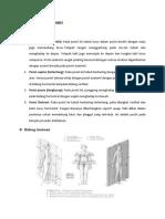 Daftar istilah anatomi