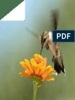 Bird on Zinnia