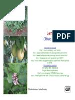 que es el limon pdf