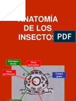 ANATOMÍA INSECTIL