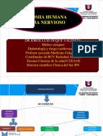 anatomiasistemanervioso3-140312172610-phpapp02
