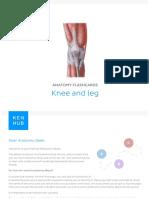 Anatomy lower limb