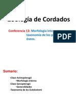 Conferencia 13. Actinopterigios II