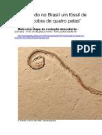 Encontrado No Brasil Um Fóssil de Uma Cobra de 4 Patas