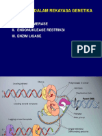 enzim-restriksi 2