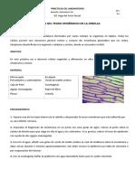 2. Observación Del Tejido Epidérmico de La Cebolla