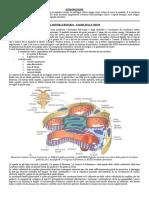 Patologia Clinica Completa