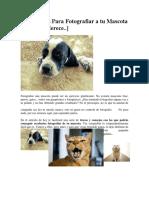 12 Consejos Para Fotografiar a Tu Mascota