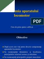 Anatomia aparatului locomotor