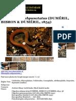 Sibynophis subpunctatus | The Reptile Database