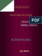Clases Peces del Ecuador.ppt