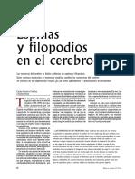 Espinas y Filopodios.pdf