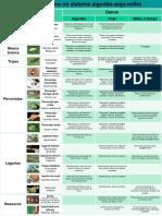 pôsteres pragas comuns e específicas