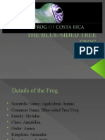 The Blue-sided Tree Frog2
