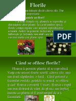 Flori Le