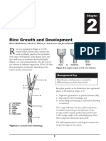 Cereal Growth and Development