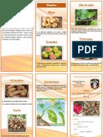 TRIPTICO PLANTAS NATIVAS.pdf
