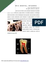ANATOMIA DENTAL INTERNA.pdf
