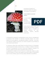 Cogumelos Magicos Resumido