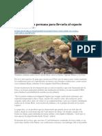 Estudian Papa Peruana Para Llevarla Al Espacio
