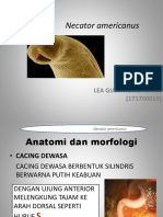 PPT Necator Americanus