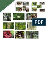 gambr flora fauna indo.docx