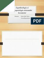 Ergofiziologia si Ergopatologia sistemului locomotor.pptx